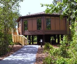 Disney World Treehouse (David G. Molyneaux, TheTravelMavens.com)