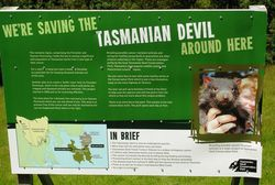 Protecting Devils in Tasmania (Photo by David G. Molyneaux, TheTravelMavens.com)