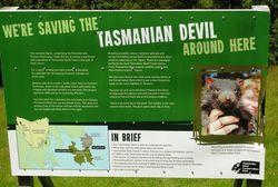 Protecting Devils in Tasmania (Photo by David G. Molyneaux, TheTravelMavens.com)
