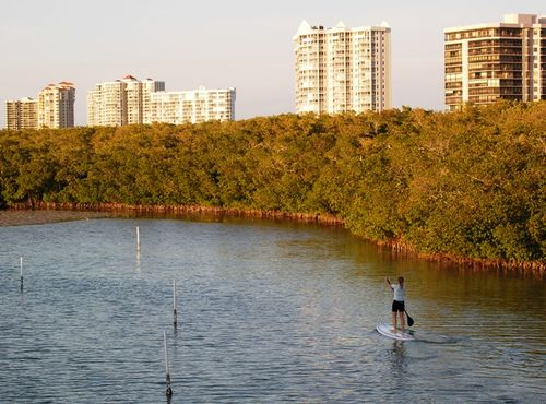 Mangroves of Naples, Florida (Photo by David G. Molyneaux, TheTravelMavens.com)