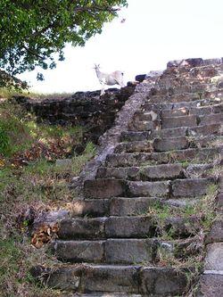 Les Saintes goat (photo by David G. Molyneaux, TheTravelMavens.com)