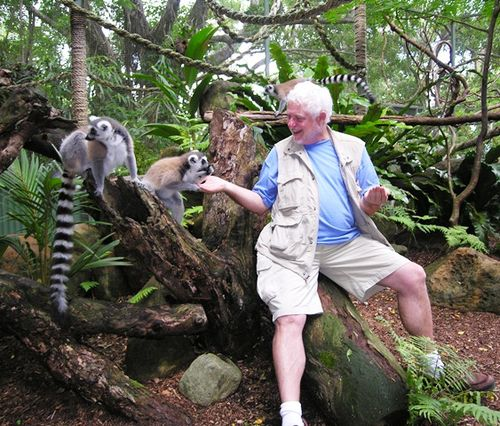 David Molyneaux feeding the lemurs at Cairns Tropical Zoo