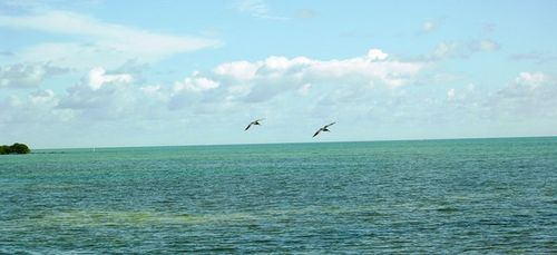 Goal for my latest Florida car rental was hanging out with the pelicans in the Keys (Photo by David G. Molyneaux, TheTravelMavens.com)