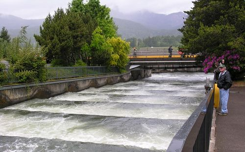 Salmon get their own path around a dam on the Columbia River (Photo by David G. Molyneaux, TheTravelMavens.com)