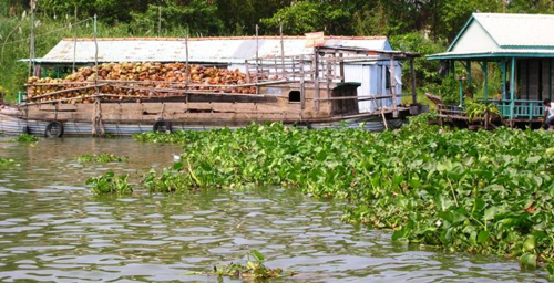 A barge of coconut shells for burning in making bricks (Photo by David G. Molyneaux, TheTravelMavens.com)