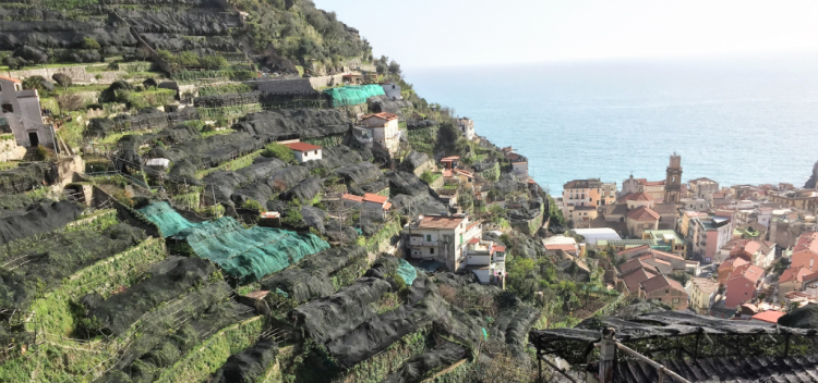 Lemons, grapes and vegetables fill the terraced slopes behind the town of Minori, Italy (Photo by David G. Molyneaux, TheTravelMavens.com)