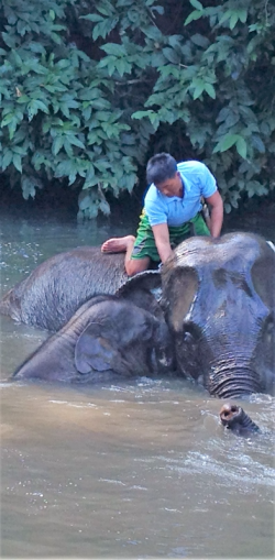 A bath at elephant camp near Katha, Myanmar (Photo by David G. Molyneaux, TheTravelMavens.com)