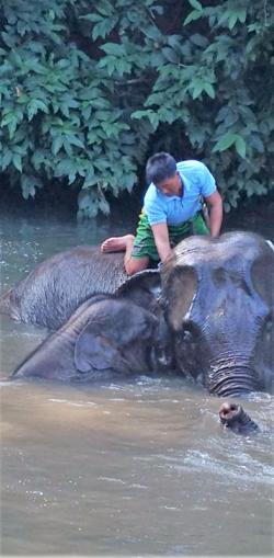 A bath at elephant camp near Katha, Myanmar (Photo by David G. Molyneaux, TheTravelMavens.com)